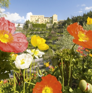 Spring at Merano